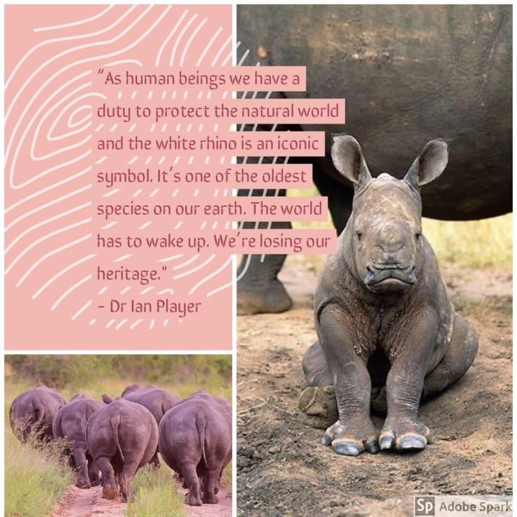 Rhino Facts – Rhinos of Buffalo Dream Ranch
